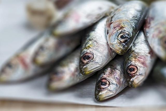 riba tokom trudnoće