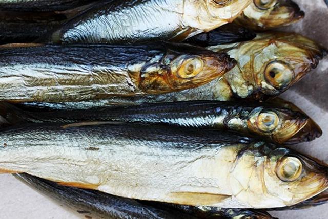 riba za trudnoću 1